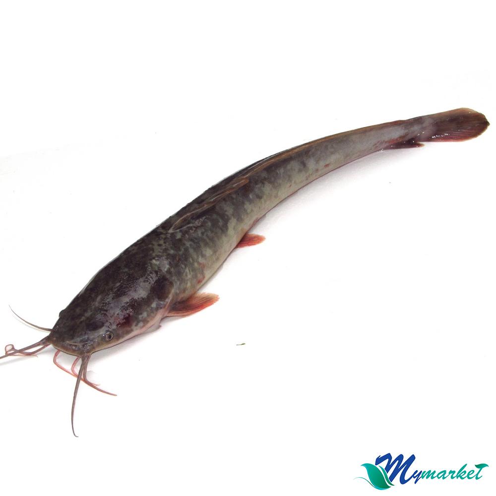 Ikan Keli 500g