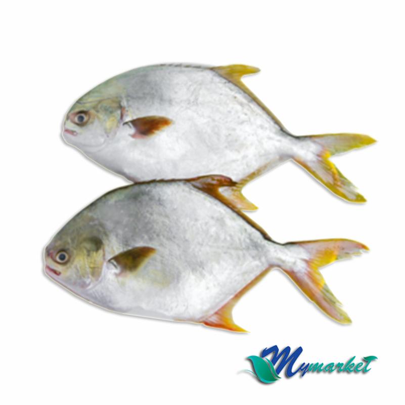 Ikan Bawal Emas 1kg