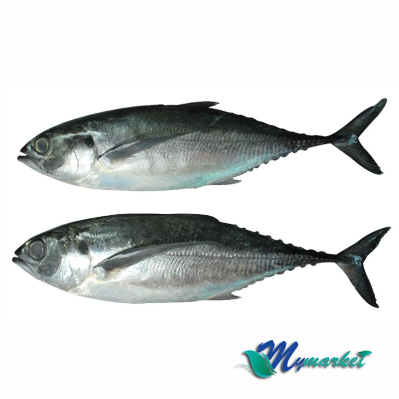 Ikan Cencaru 500g